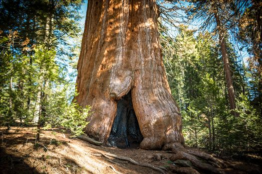 """Nature's peace will flow into you as sunshine flows into trees."" -John Muir